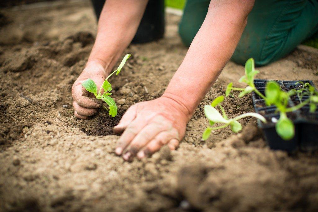 Когда сажать капусту на рассаду в марте по лунному календарю?