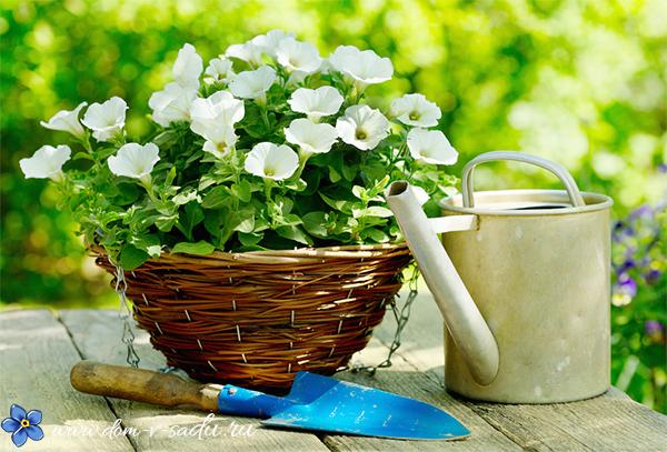 Когда сажать петунию на рассаду по лунному календарю в апреле?