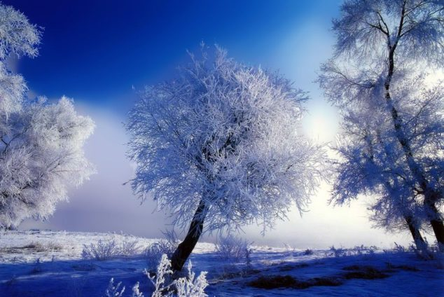 Народный календарь на декабрь
